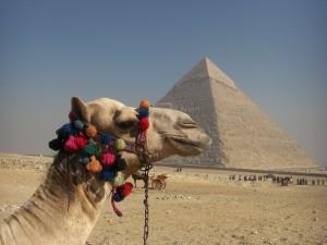 Kamel Kairo