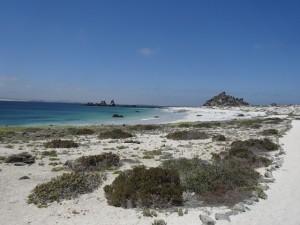 Naturschutzgebiet Pinguinos Humboldt