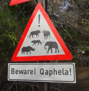 Nyala swasiland Reiseblog von Autorin Beatrice Sonntag