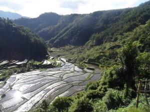 Reisterrassen in Batad, Philippinen