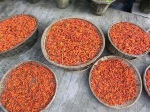 Chilichoten in Laos